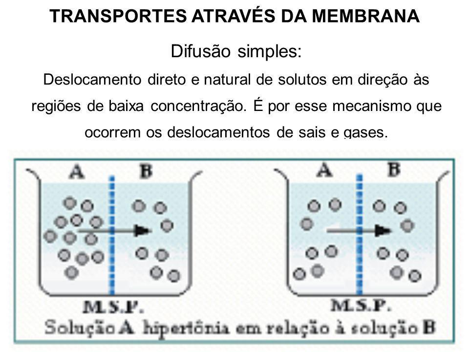 TRANSPORTES ATRAVÉS DA MEMBRANA Difusão simples: Deslocamento direto e natural de solutos em direção às regiões de baixa concentração.
