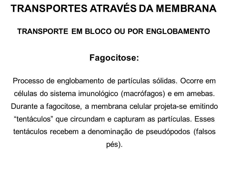 TRANSPORTE EM BLOCO OU POR ENGLOBAMENTO Fagocitose: Processo de englobamento de partículas sólidas.