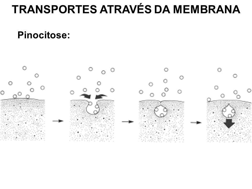 TRANSPORTES ATRAVÉS DA MEMBRANA Pinocitose: