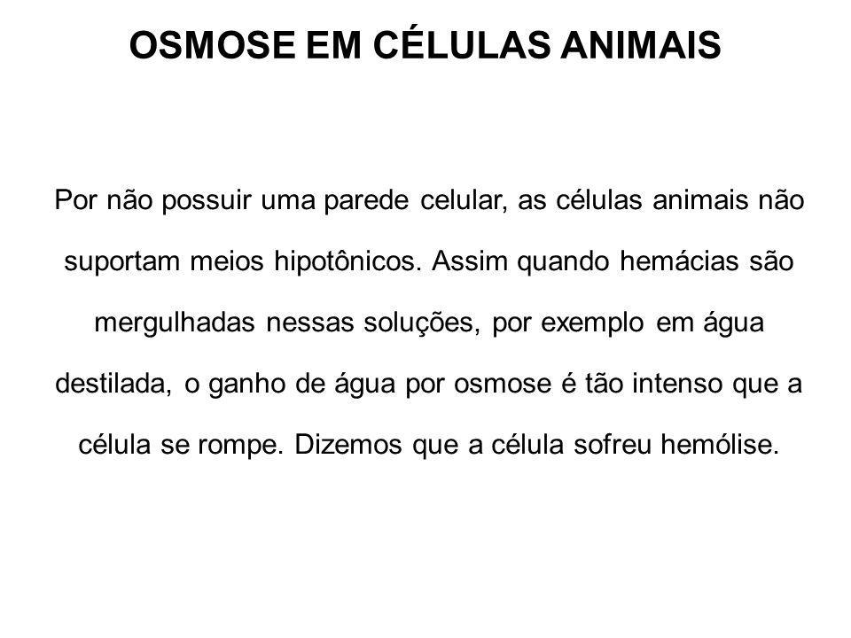 OSMOSE EM CÉLULAS ANIMAIS Por não possuir uma parede celular, as células animais não suportam meios hipotônicos. Assim quando hemácias são mergulhadas