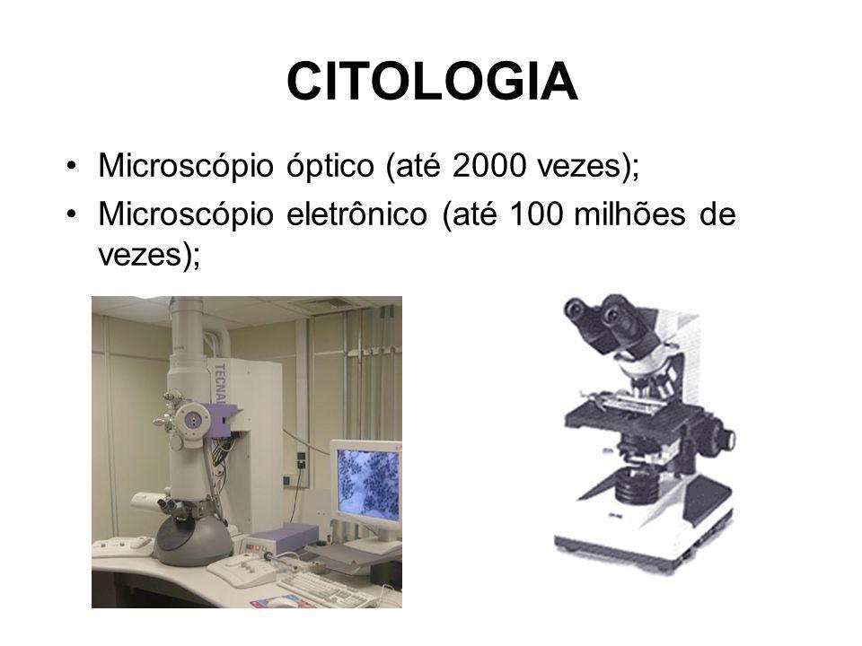 Retículo Endoplasmático Liso Retículo Endoplasmático Rugoso Ribossomos Núcleo Membrana Plasmática Mitocôndria Complexo de Golgi Lisossomos Centríolos
