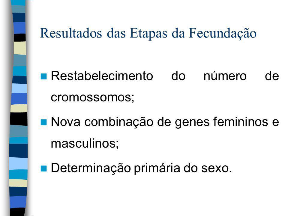 Resultados das Etapas da Fecundação Restabelecimento do número de cromossomos; Nova combinação de genes femininos e masculinos; Determinação primária do sexo.