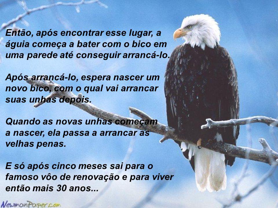 Então, após encontrar esse lugar, a águia começa a bater com o bico em uma parede até conseguir arrancá-lo. Após arrancá-lo, espera nascer um novo bic