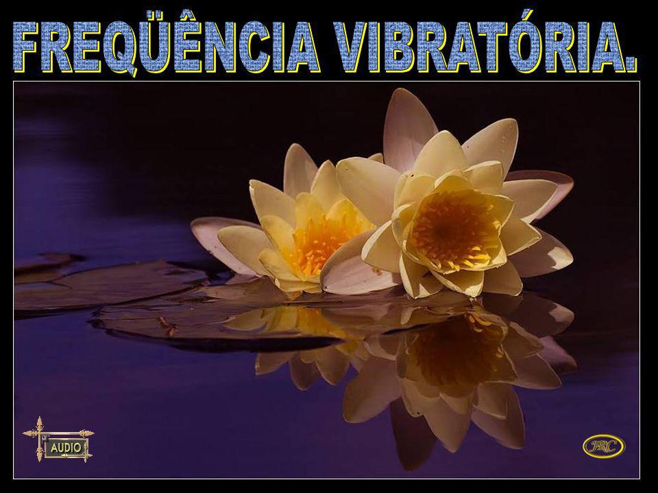Quem não oferece sintonia para o mal não entra na freqüência vibratória da desarmonia. Irmão José.