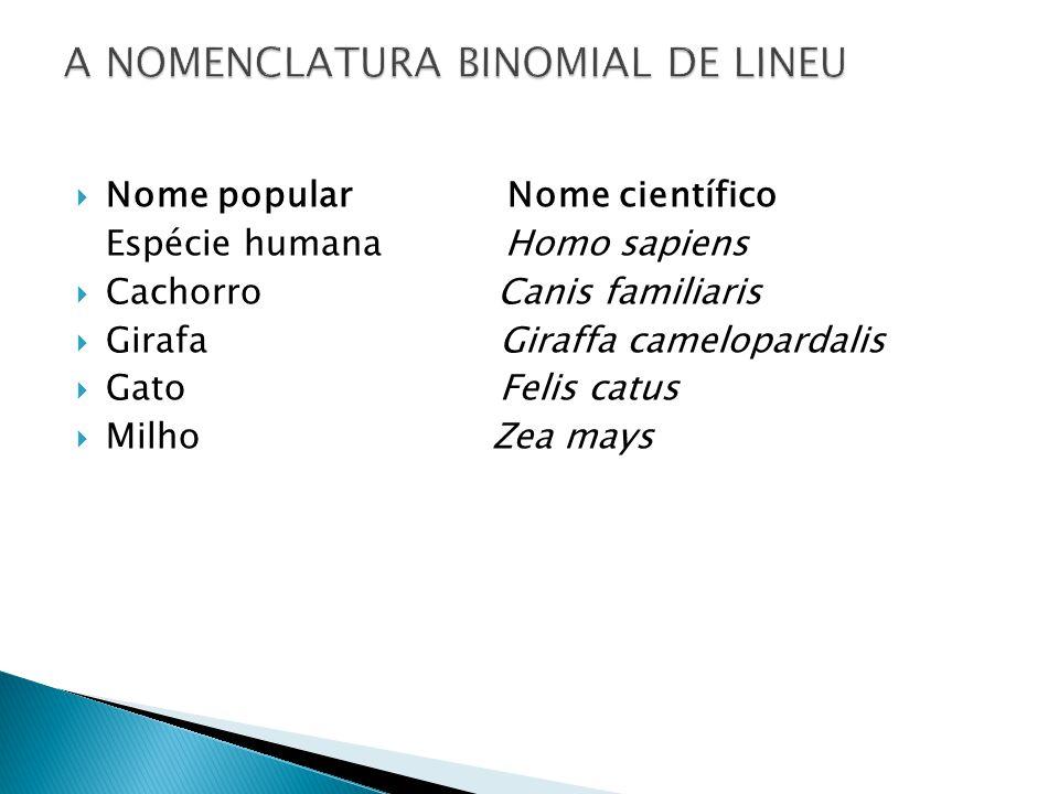 Nome popular Nome científico Espécie humana Homo sapiens Cachorro Canis familiaris Girafa Giraffa camelopardalis Gato Felis catus Milho Zea mays