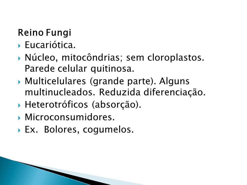 Reino Fungi Eucariótica. Núcleo, mitocôndrias; sem cloroplastos. Parede celular quitinosa. Multicelulares (grande parte). Alguns multinucleados. Reduz