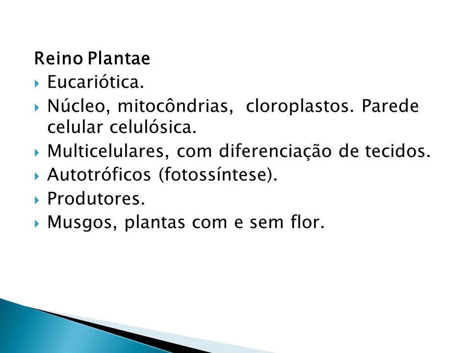 Reino Plantae Eucariótica. Núcleo, mitocôndrias, cloroplastos. Parede celular celulósica. Multicelulares, com diferenciação de tecidos. Autotróficos (