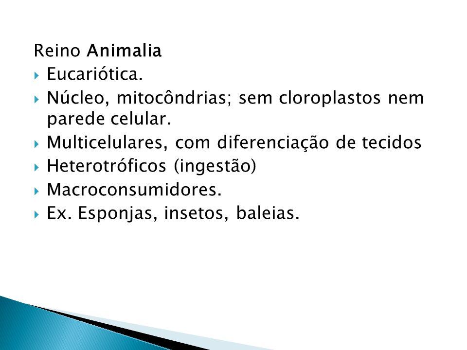 Reino Animalia Eucariótica. Núcleo, mitocôndrias; sem cloroplastos nem parede celular. Multicelulares, com diferenciação de tecidos Heterotróficos (in