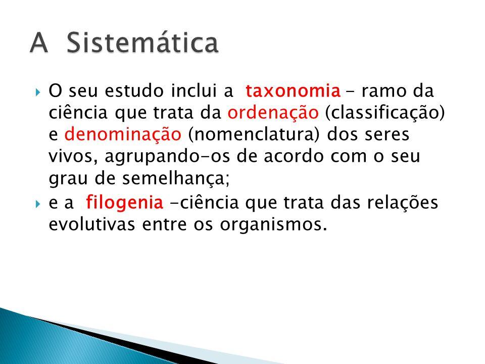 O seu estudo inclui a taxonomia - ramo da ciência que trata da ordenação (classificação) e denominação (nomenclatura) dos seres vivos, agrupando-os de