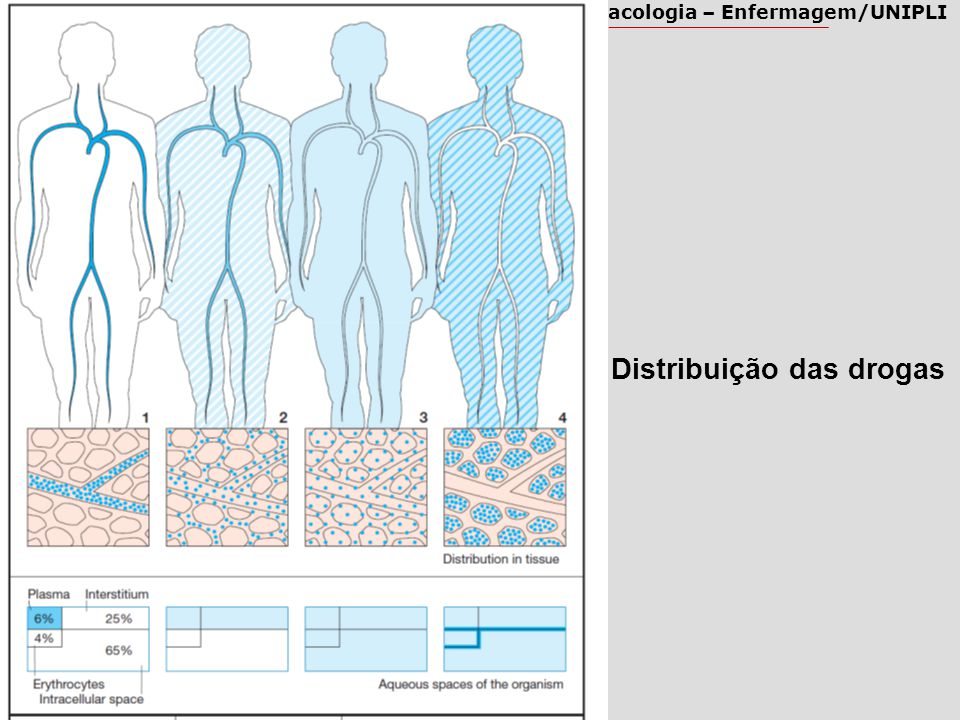 Farmacologia – Enfermagem/UNIPLI Distribuição das drogas