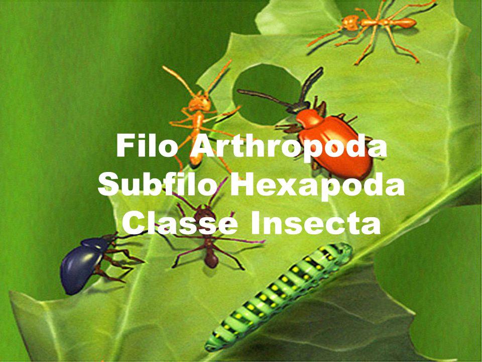 Filo Arthropoda Subfilo Hexapoda Classe Insecta