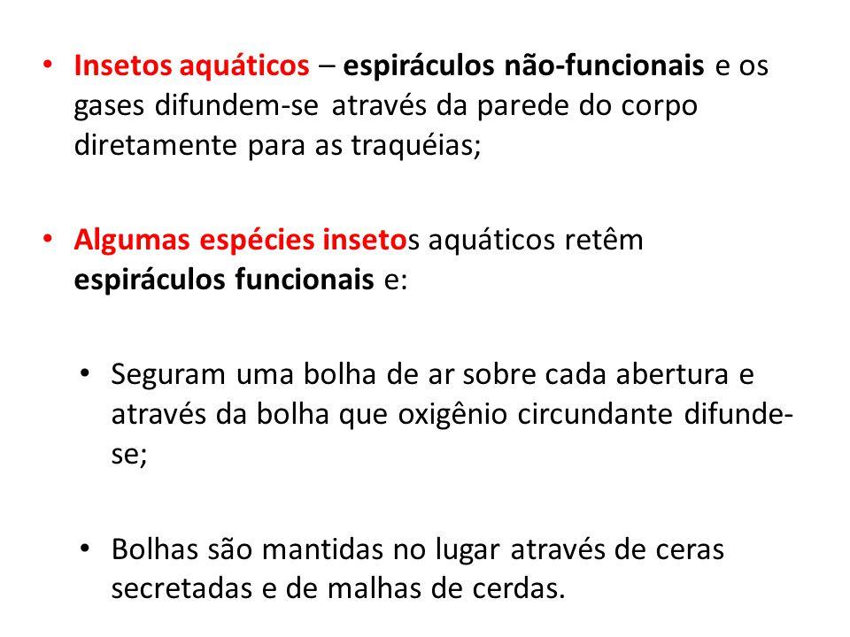 Insetos aquáticos – espiráculos não-funcionais e os gases difundem-se através da parede do corpo diretamente para as traquéias; Algumas espécies inset