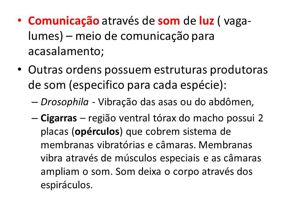Comunicação através de som de luz ( vaga- lumes) – meio de comunicação para acasalamento; Outras ordens possuem estruturas produtoras de som (especifi