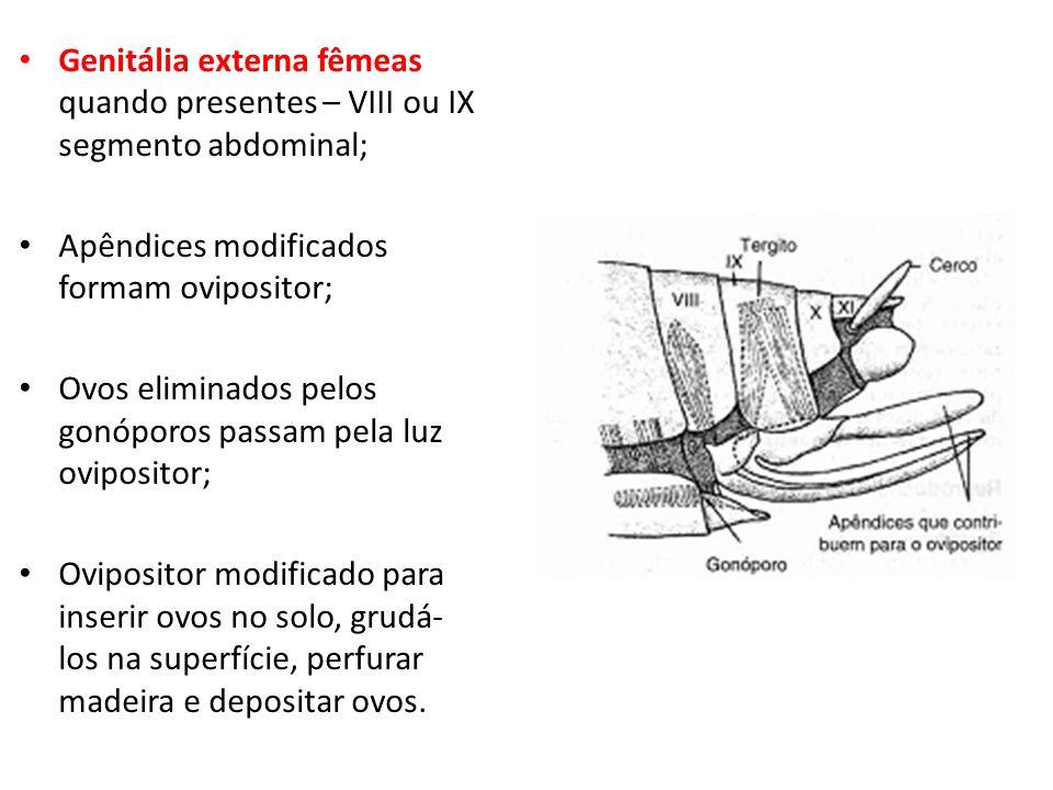 Genitália externa fêmeas quando presentes – VIII ou IX segmento abdominal; Apêndices modificados formam ovipositor; Ovos eliminados pelos gonóporos pa