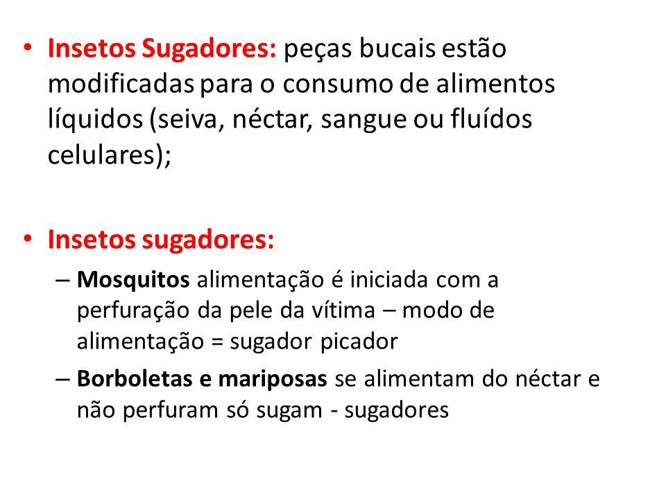 Insetos Sugadores: peças bucais estão modificadas para o consumo de alimentos líquidos (seiva, néctar, sangue ou fluídos celulares); Insetos sugadores