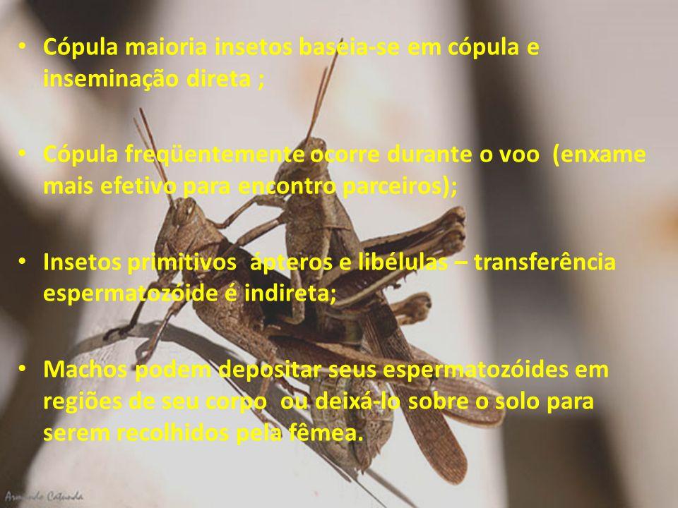 Cópula maioria insetos baseia-se em cópula e inseminação direta ; Cópula freqüentemente ocorre durante o voo (enxame mais efetivo para encontro parcei