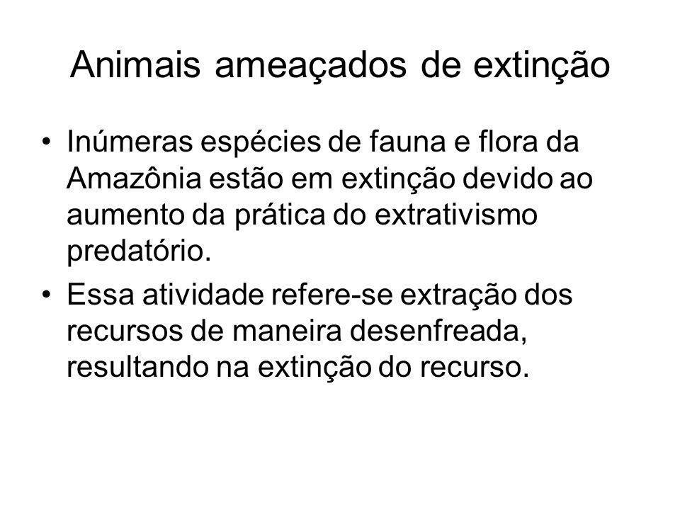 Animais ameaçados de extinção Inúmeras espécies de fauna e flora da Amazônia estão em extinção devido ao aumento da prática do extrativismo predatório.