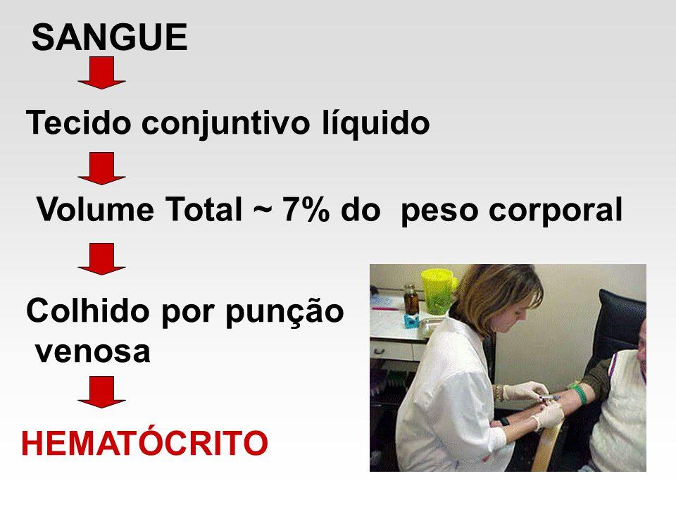 SANGUE Tecido conjuntivo líquido Volume Total ~ 7% do peso corporal Colhido por punção venosa HEMATÓCRITO