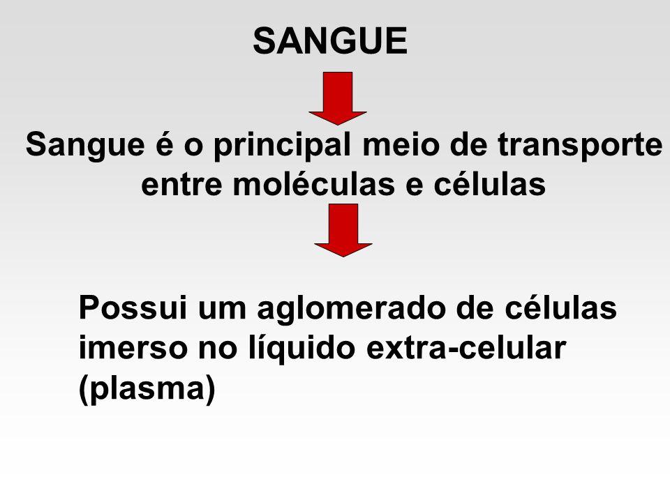 SANGUE Sangue é o principal meio de transporte entre moléculas e células Possui um aglomerado de células imerso no líquido extra-celular (plasma)