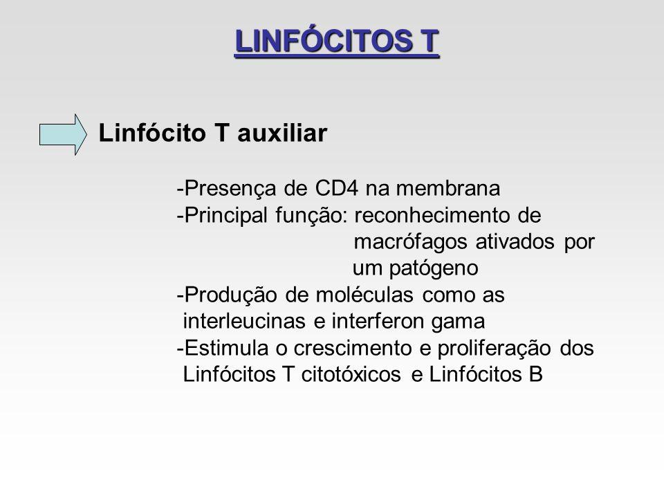 LINFÓCITOS T Linfócito T auxiliar -Presença de CD4 na membrana -Principal função: reconhecimento de macrófagos ativados por um patógeno -Produção de m