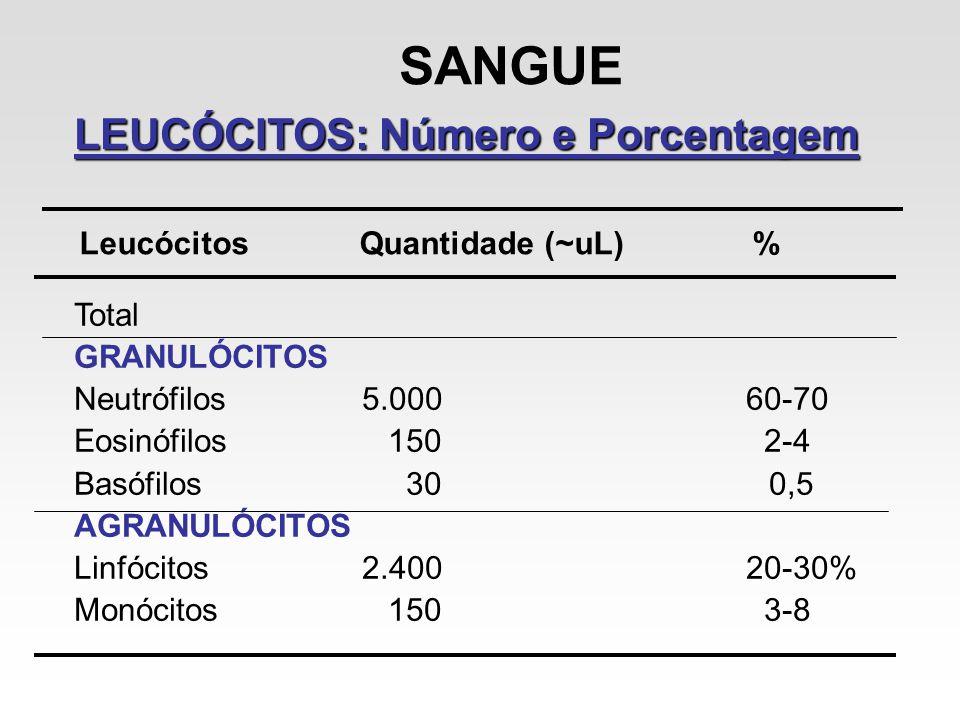 SANGUE LEUCÓCITOS: Número e Porcentagem Leucócitos Quantidade (~uL) % Total GRANULÓCITOS Neutrófilos5.00060-70 Eosinófilos 150 2-4 Basófilos 30 0,5 AG