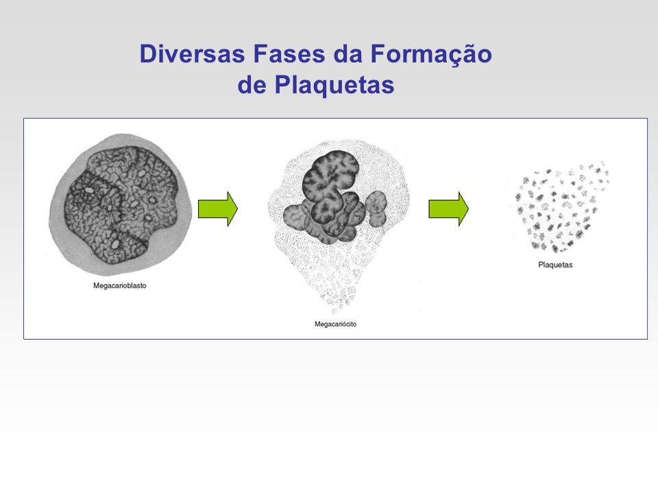 Diversas Fases da Formação de Plaquetas
