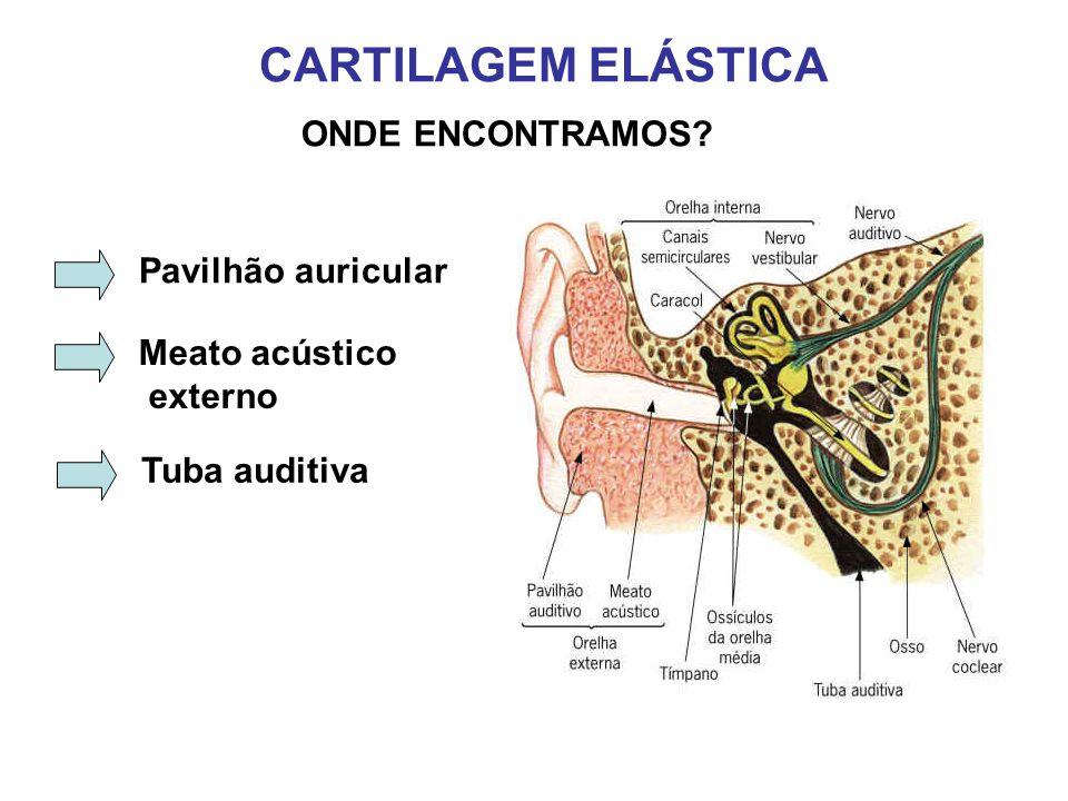 CARTILAGEM ELÁSTICA ONDE ENCONTRAMOS? Pavilhão auricular Meato acústico externo Tuba auditiva