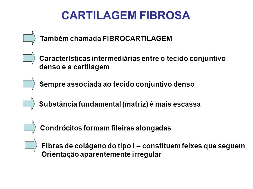 CARTILAGEM FIBROSA Também chamada FIBROCARTILAGEM Características intermediárias entre o tecido conjuntivo denso e a cartilagem Sempre associada ao tecido conjuntivo denso Substância fundamental (matriz) é mais escassa Condrócitos formam fileiras alongadas Fibras de colágeno do tipo I – constituem feixes que seguem Orientação aparentemente irregular
