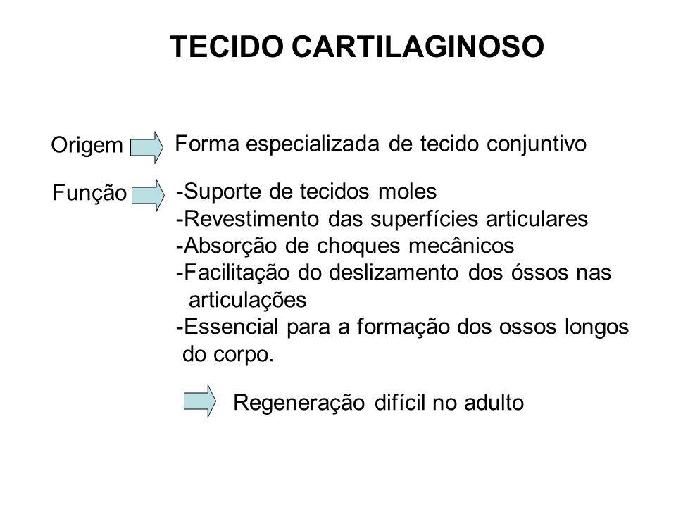TECIDO CARTILAGINOSO Origem Forma especializada de tecido conjuntivo Função -Suporte de tecidos moles -Revestimento das superfícies articulares -Absorção de choques mecânicos -Facilitação do deslizamento dos óssos nas articulações -Essencial para a formação dos ossos longos do corpo.