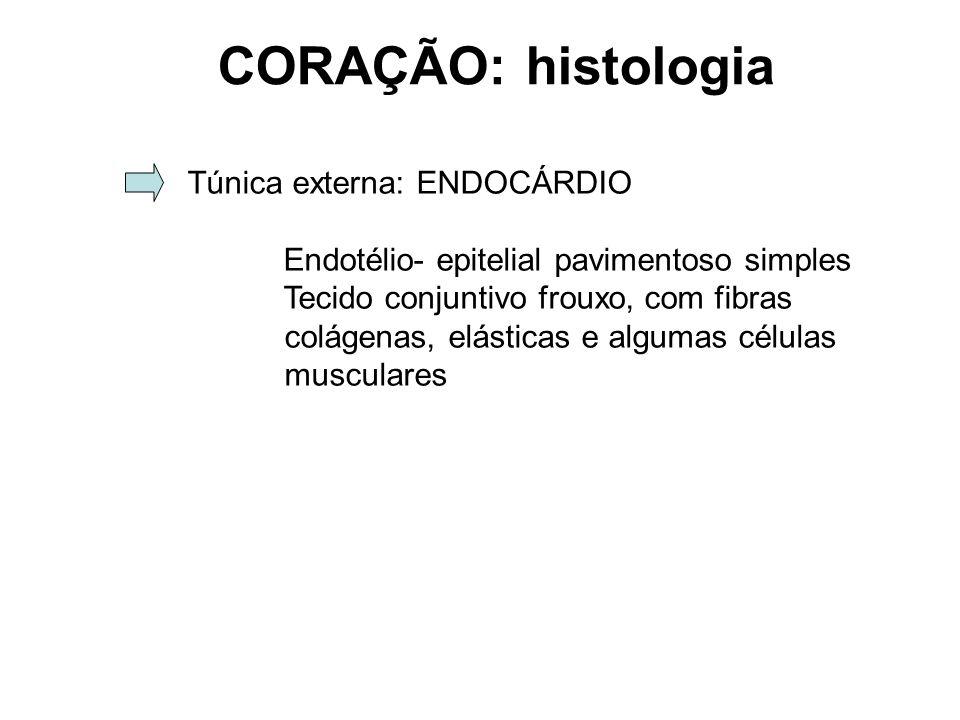 Túnica externa: ENDOCÁRDIO Endotélio- epitelial pavimentoso simples Tecido conjuntivo frouxo, com fibras colágenas, elásticas e algumas células musculares CORAÇÃO: histologia