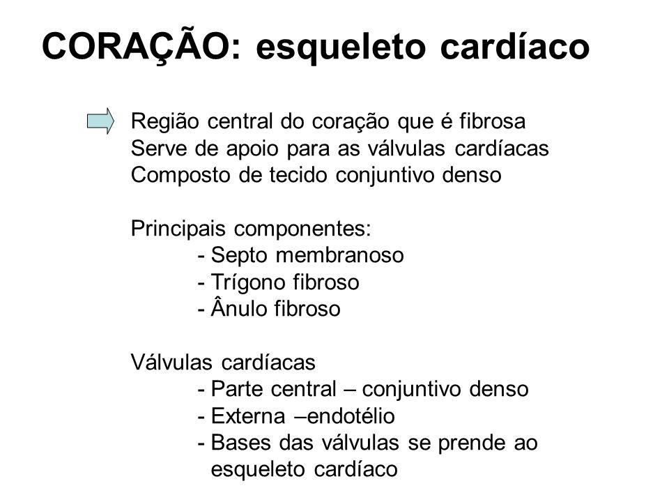 CORAÇÃO: esqueleto cardíaco Região central do coração que é fibrosa Serve de apoio para as válvulas cardíacas Composto de tecido conjuntivo denso Principais componentes: - Septo membranoso - Trígono fibroso - Ânulo fibroso Válvulas cardíacas - Parte central – conjuntivo denso - Externa –endotélio - Bases das válvulas se prende ao esqueleto cardíaco
