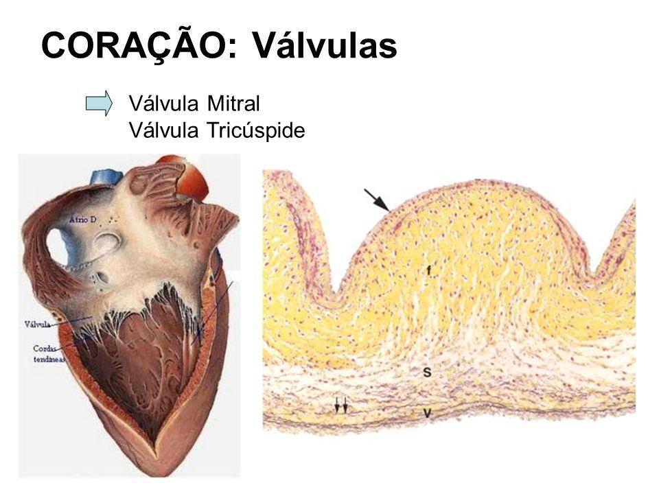 CORAÇÃO: Válvulas Válvula Mitral Válvula Tricúspide
