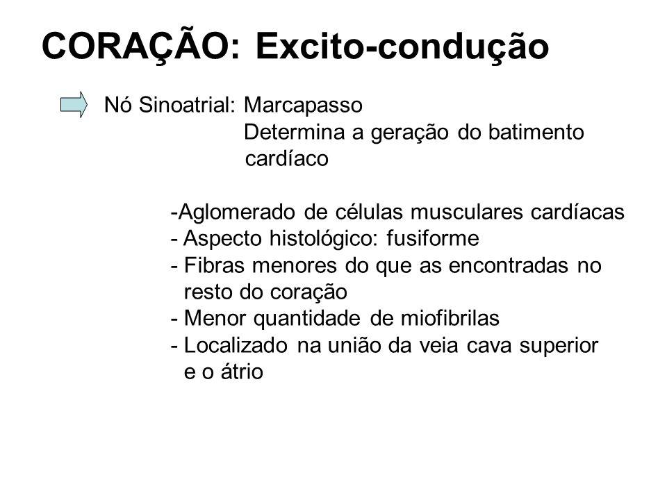 CORAÇÃO: Excito-condução Nó Sinoatrial: Marcapasso Determina a geração do batimento cardíaco -Aglomerado de células musculares cardíacas - Aspecto his