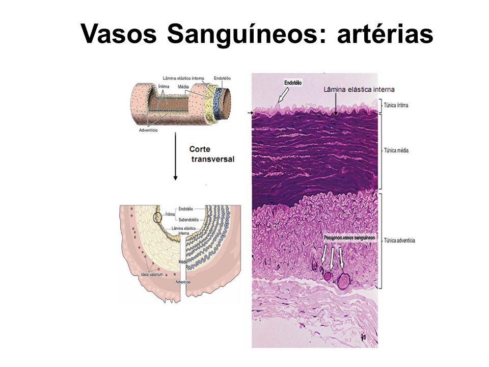 Vasos Sanguíneos: artérias