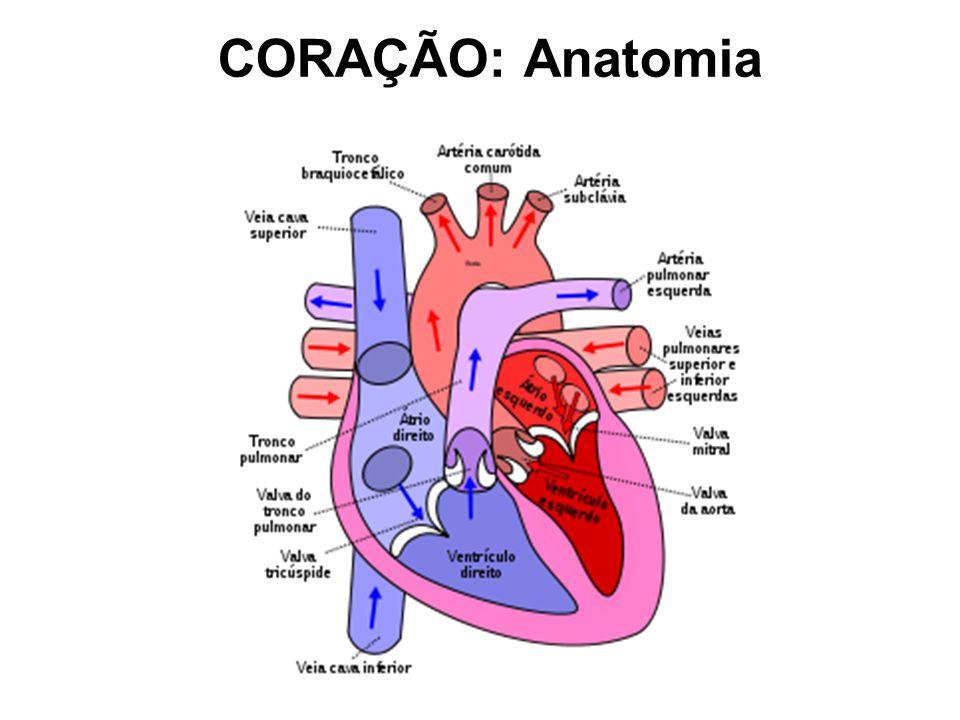 CORAÇÃO: Anatomia