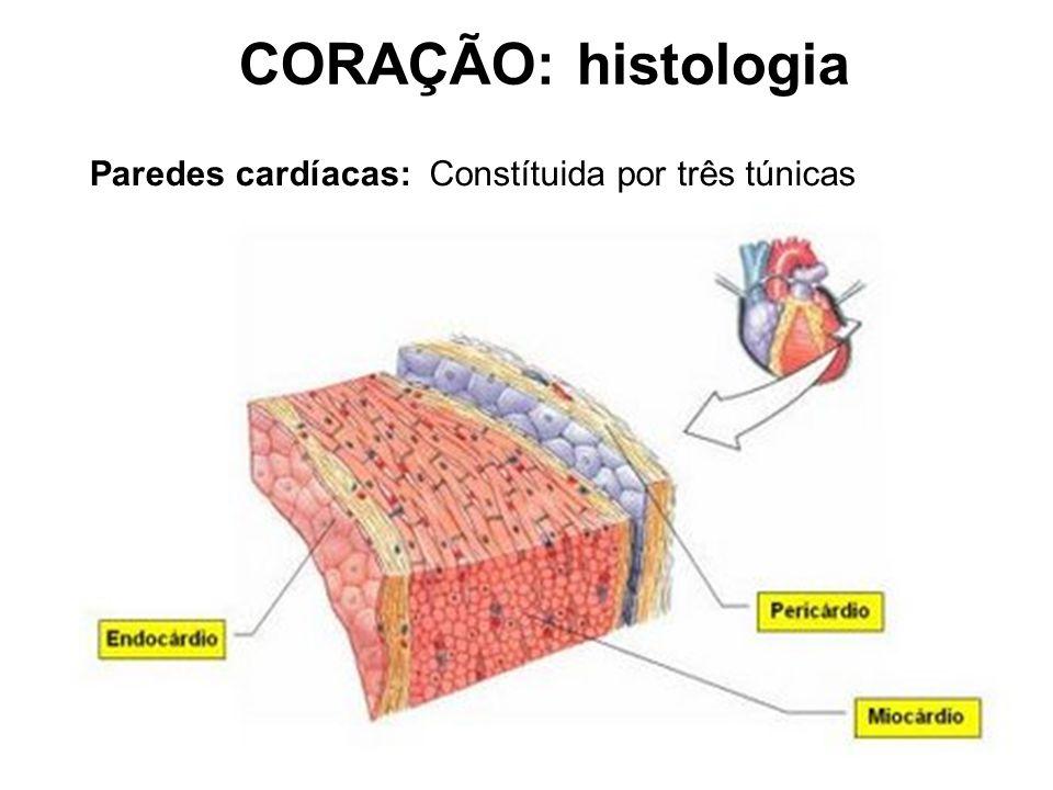 Paredes cardíacas:Constítuida por três túnicas