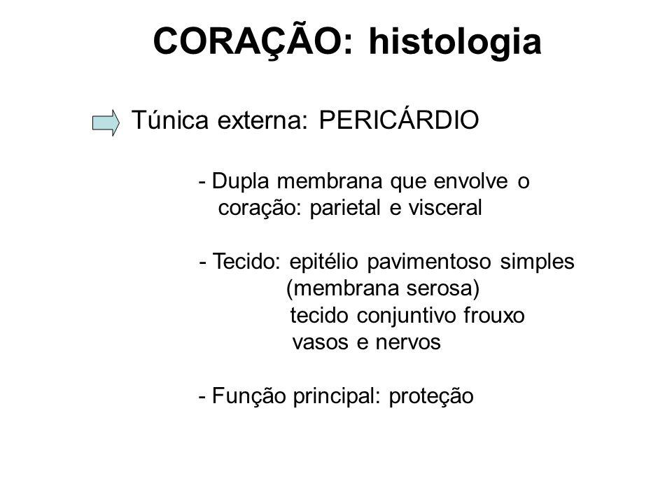 CORAÇÃO: histologia Túnica externa: PERICÁRDIO - Dupla membrana que envolve o coração: parietal e visceral - Tecido: epitélio pavimentoso simples (membrana serosa) tecido conjuntivo frouxo vasos e nervos - Função principal: proteção