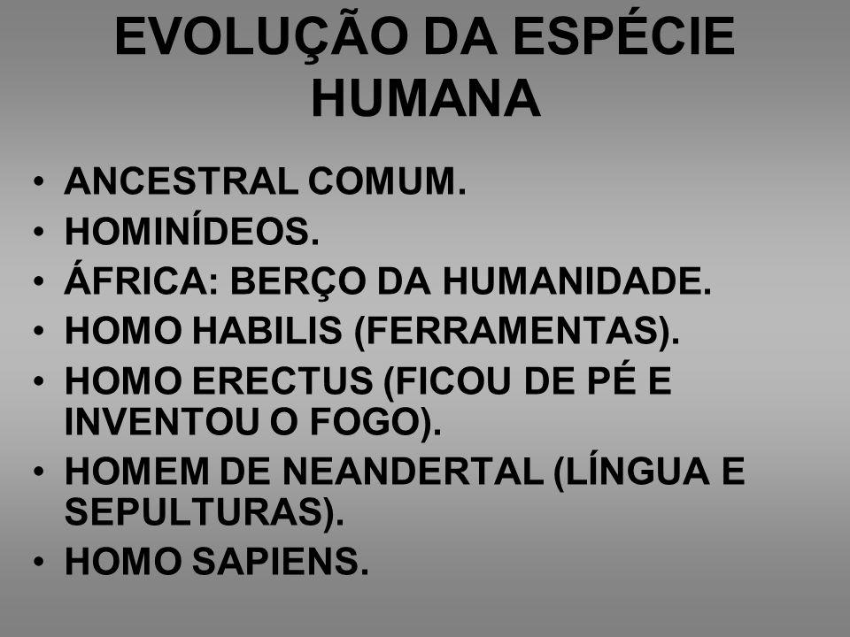 EVOLUÇÃO DA ESPÉCIE HUMANA ANCESTRAL COMUM. HOMINÍDEOS. ÁFRICA: BERÇO DA HUMANIDADE. HOMO HABILIS (FERRAMENTAS). HOMO ERECTUS (FICOU DE PÉ E INVENTOU