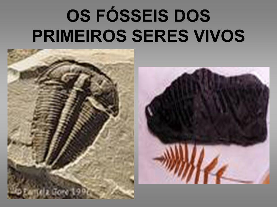 OS FÓSSEIS DOS PRIMEIROS SERES VIVOS
