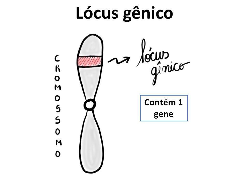 Lócus gênico Contém 1 gene