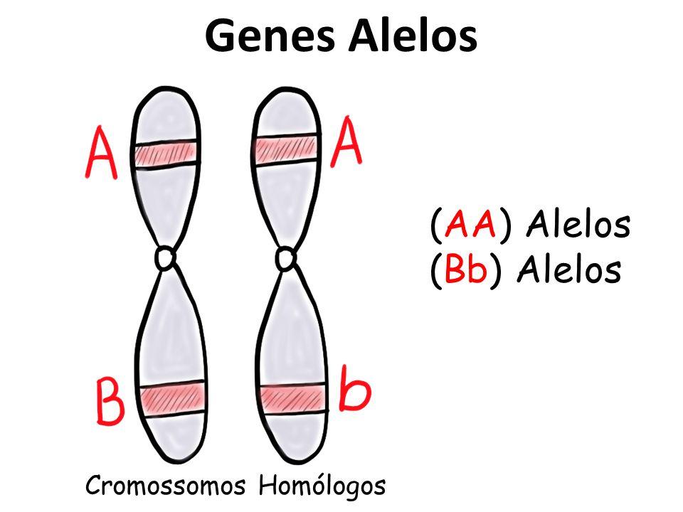 Genes Alelos (AA) Alelos (Bb) Alelos Cromossomos Homólogos