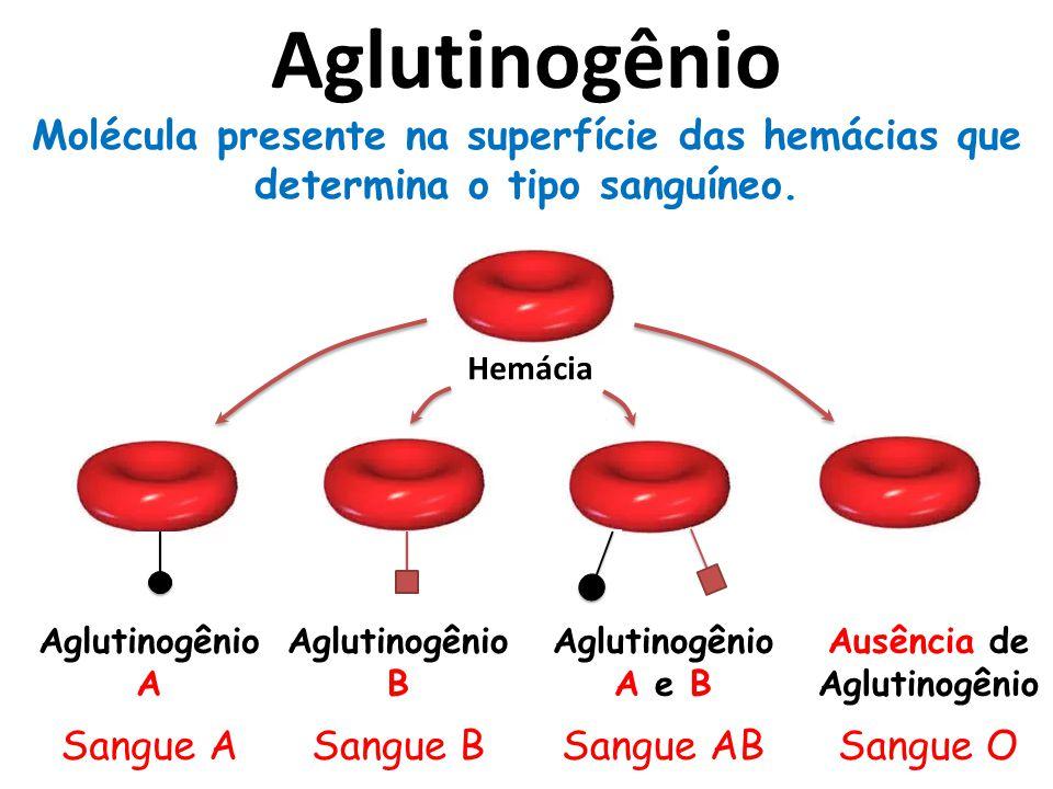 Hemácia Aglutinogênio A Sangue A Aglutinogênio B Sangue B Aglutinogênio A e B Sangue AB Ausência de Aglutinogênio Sangue O Aglutinogênio Molécula presente na superfície das hemácias que determina o tipo sanguíneo.
