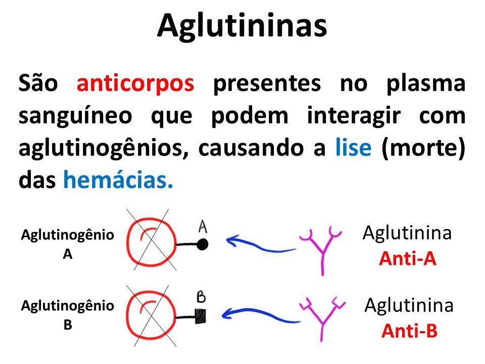 Aglutininas São anticorpos presentes no plasma sanguíneo que podem interagir com aglutinogênios, causando a lise (morte) das hemácias. Aglutinina Anti