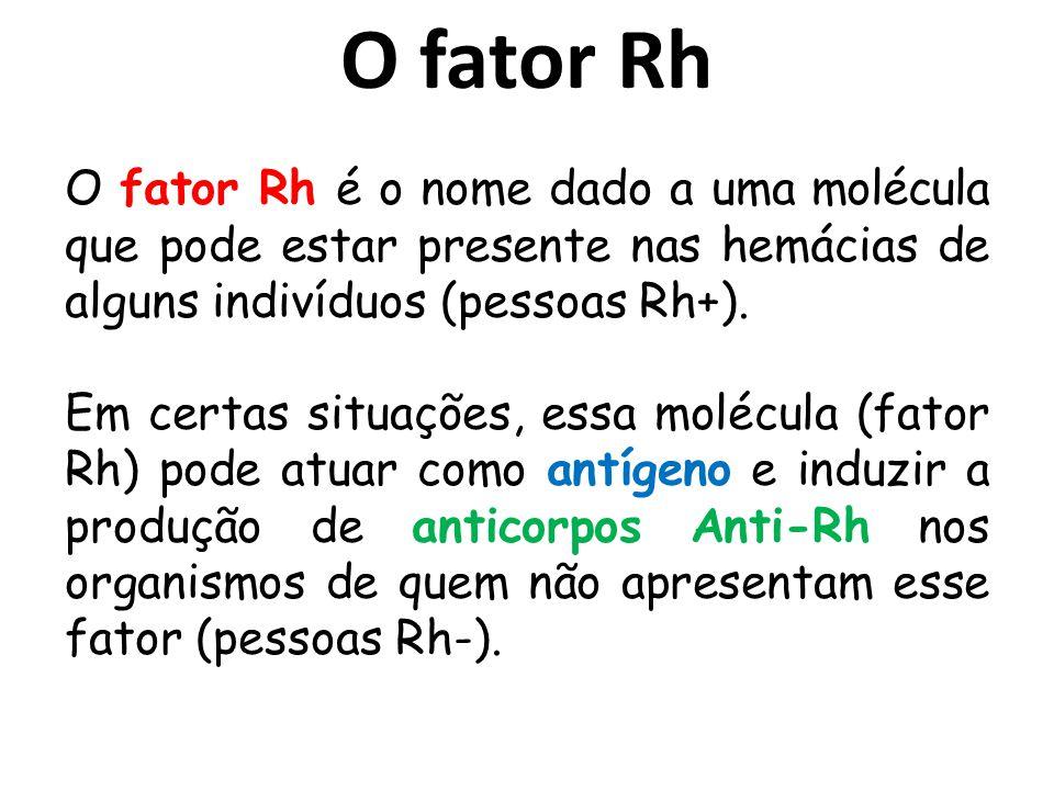 O fator Rh O fator Rh é o nome dado a uma molécula que pode estar presente nas hemácias de alguns indivíduos (pessoas Rh+). Em certas situações, essa