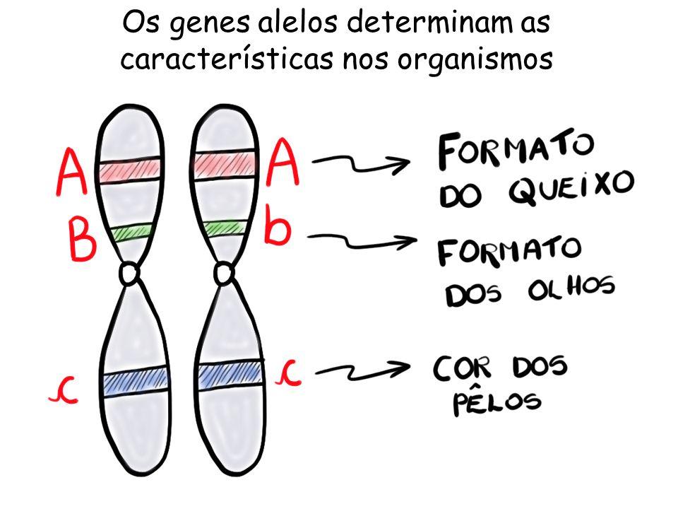 Os genes alelos determinam as características nos organismos