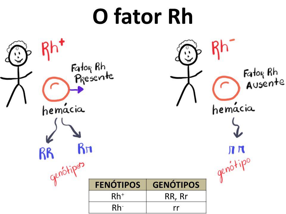 O fator Rh FENÓTIPOSGENÓTIPOS Rh + RR, Rr Rh - rr