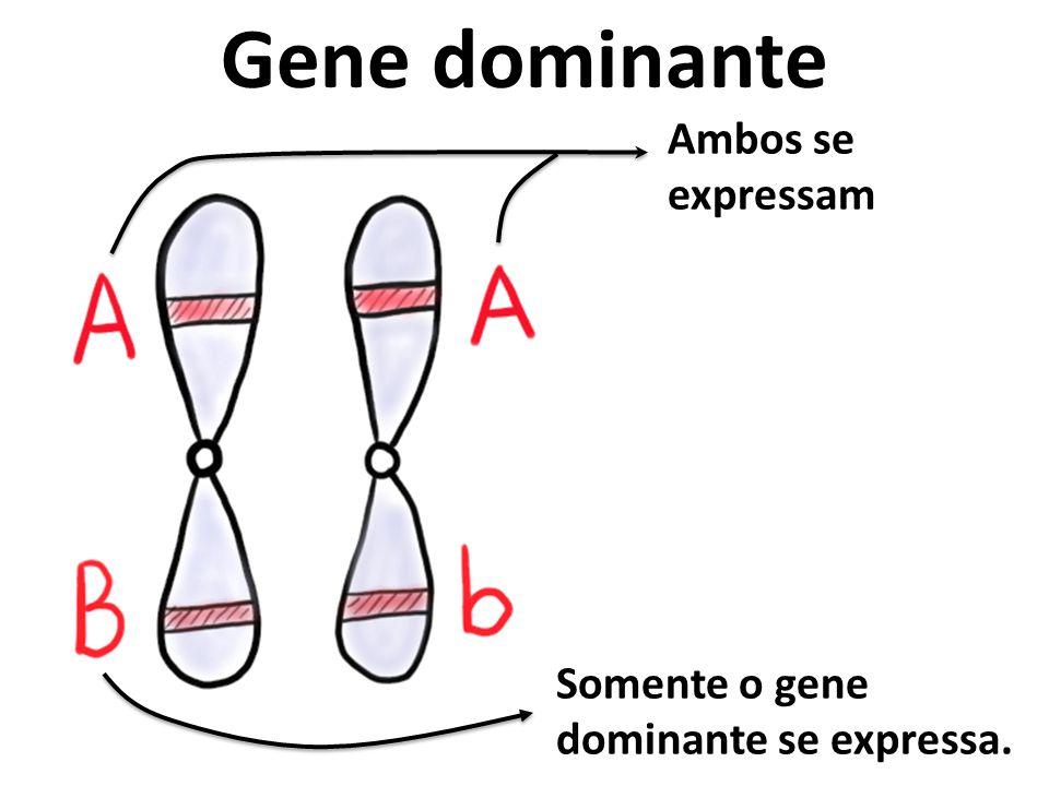 Gene dominante Ambos se expressam Somente o gene dominante se expressa.