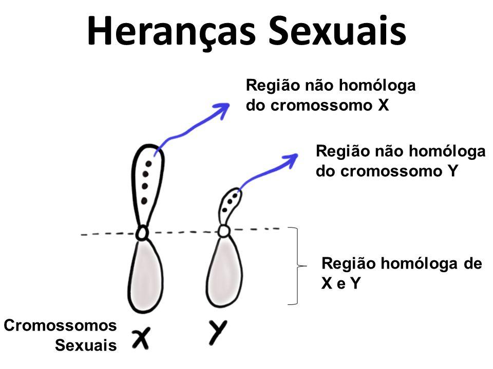Heranças Sexuais Região não homóloga do cromossomo X Região não homóloga do cromossomo Y Região homóloga de X e Y Cromossomos Sexuais
