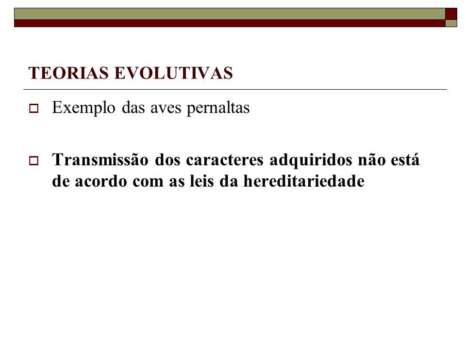 TEORIAS EVOLUTIVAS Exemplo das aves pernaltas Transmissão dos caracteres adquiridos não está de acordo com as leis da hereditariedade