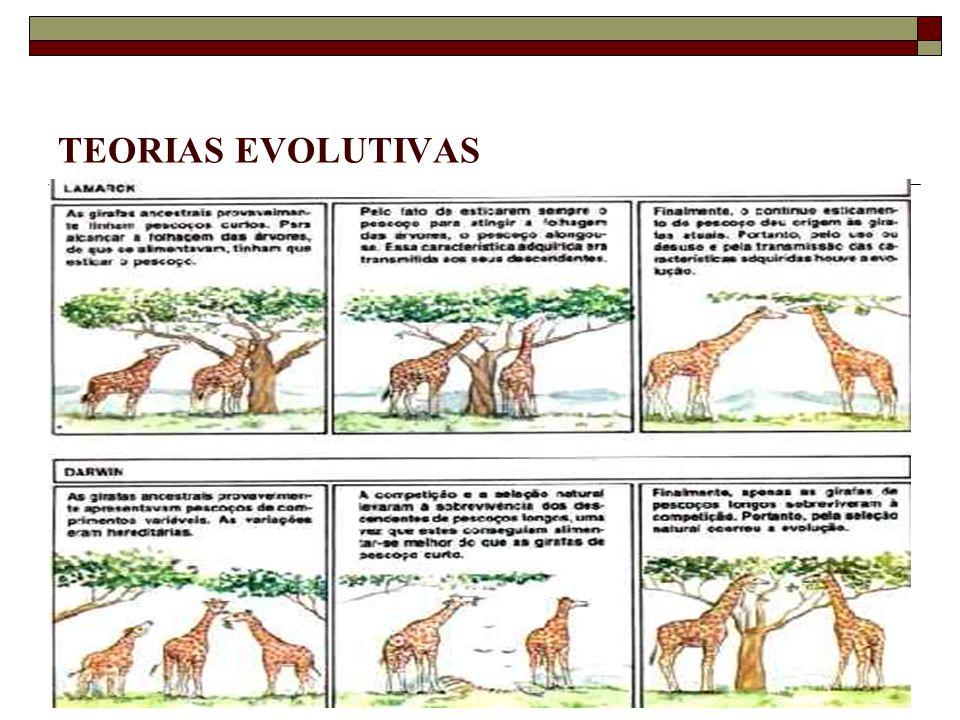 TEORIAS EVOLUTIVAS